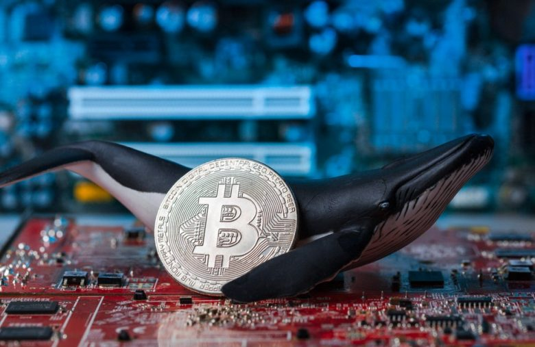 Bitcoin Whales Are the Smart Money. Don't Be the Dumb Money