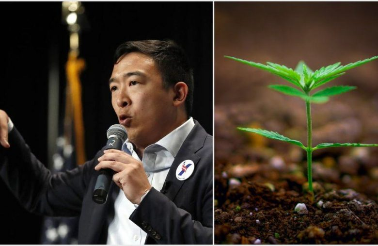 Andrew Yang High on Marijuana Legalization Could Boost Pot Stocks