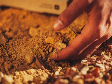 Biome Makers closes $4M to assess the quality of the 'gut bacteria' of a farm's soil