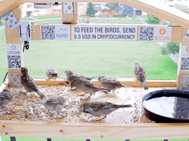 This Bitcoin Bird Feeder Has Reddit Flocking to Spend Crypto – CCN Markets