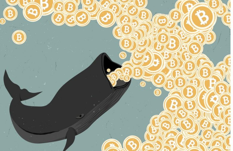 How To Trade Bitcoin Like A Whale, Not A Guppy – CCN.com
