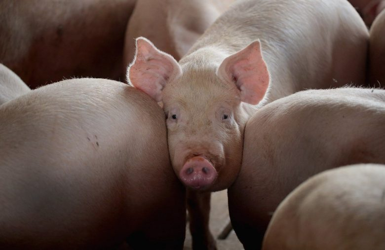 Trump's China Trade Deal Hits Another Stalemate Over America's Pigs