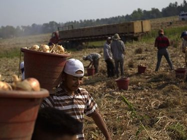 Reform Groups Rally Opposition to Farmworker Amnesty Vote on Wednesday