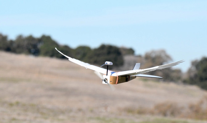 'PigeonBot' brings flying robots closer to real birds