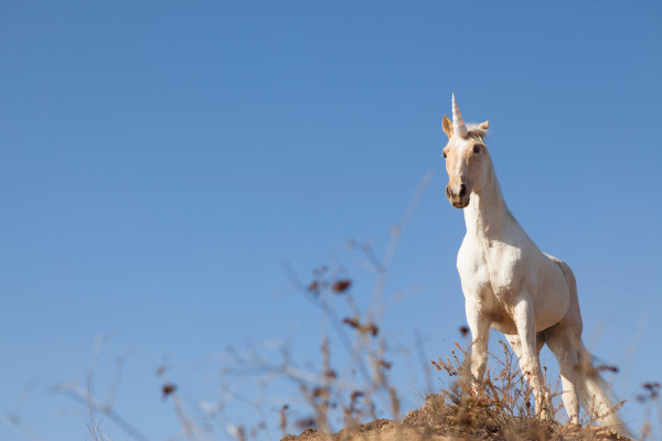 Unicorn fever as One Medical's IPO pops 40% after conservative pricing