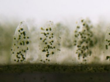 3D printed 'bionic corals' mimic a reef's powers of photosynthesis
