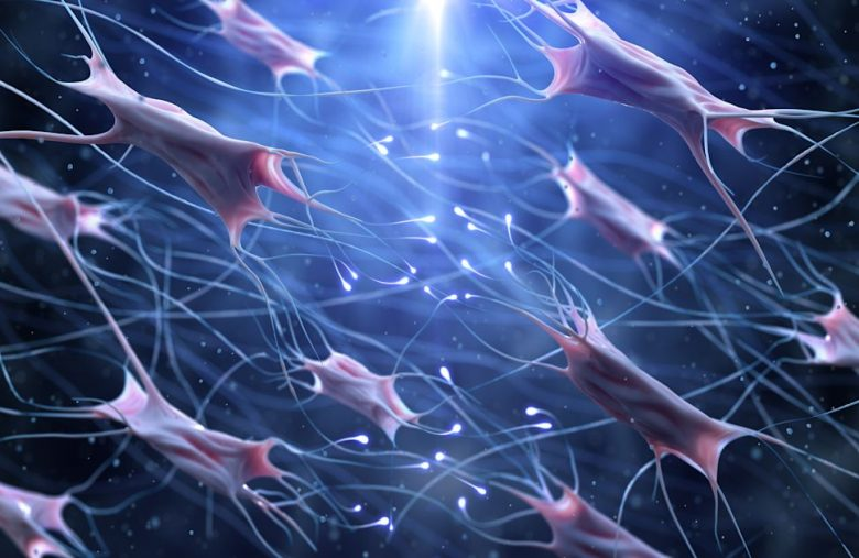 Hitting the Books: How 'universal' stem cells might fix our brains