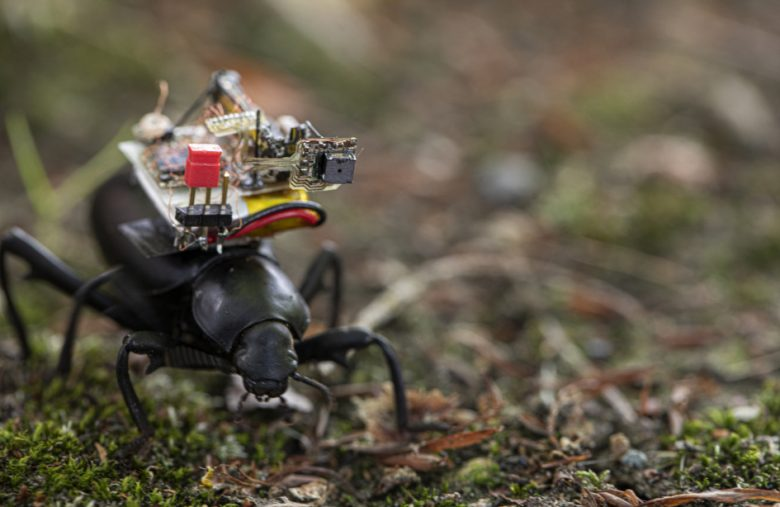 Miniature robotic camera backpack shows how beetles see the world
